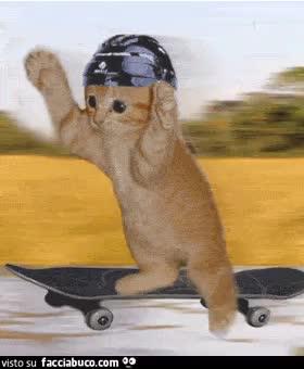 Gif gatto su sketboar